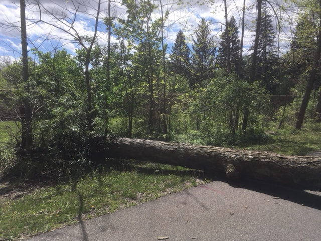 Downed tree on trail